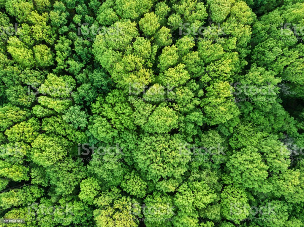 Antena Ver os bela floresta estacional decidual. Foto da aeronave de controle remoto - foto de acervo