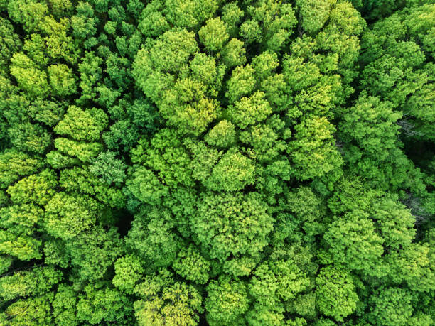 aerial view beautiful deciduous forest. photo from the drone - sustainable living stock pictures, royalty-free photos & images