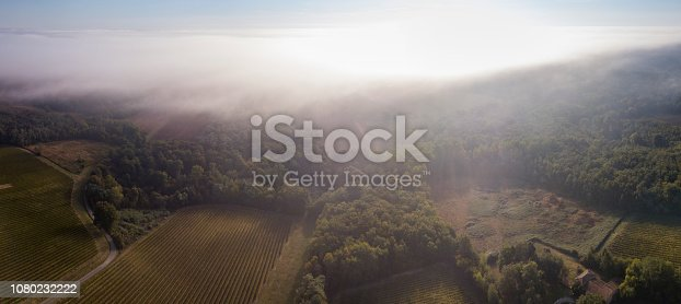 Aerial view, Bordeaux vineyard, landscape vineyard and fog at sunrise south west of france