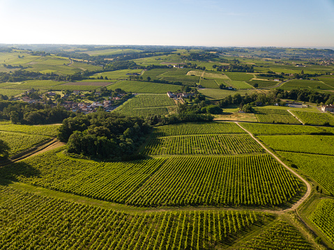 Aerial view, Bordeaux vineyard, landscape vineyard south west of france, europe