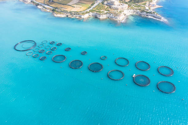 aerial view, fish farm with floating cages in the mediterranean sea. - aquaculture stock pictures, royalty-free photos & images