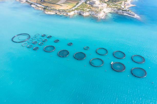 aerial view, fish farm with floating cages in the mediterranean sea. - aquacultura imagens e fotografias de stock