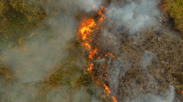 incendio forestal de vista aérea. busuanga, palawan, filipinas - deforestacion fotografías e imágenes de stock