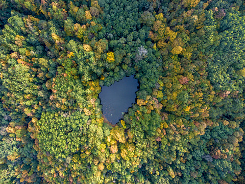 Aerial view. Forest lake in Russia.