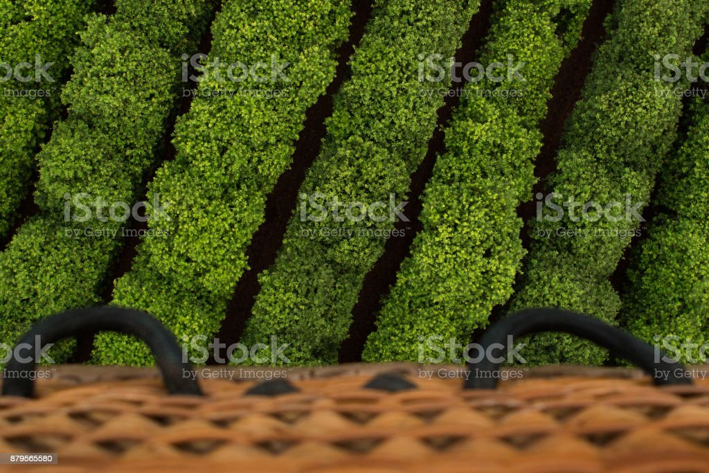 Aerial view from Hot Air Balloon over rows of green plants stock photo