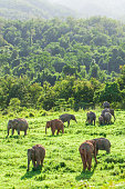Aerial view landscape, A herd of Wild Asian Elephant in the grassland in rainy season. Green and lush evergreen forest, mountains backgrounds. Kui Buri National Park, Prachuap Khiri Khan, Thailand. Bright sunlight. Copy space.