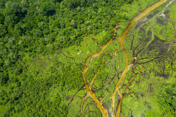 Aerial view of a bai (saline, mineral clearing) in the rainforest, Congo stock photo