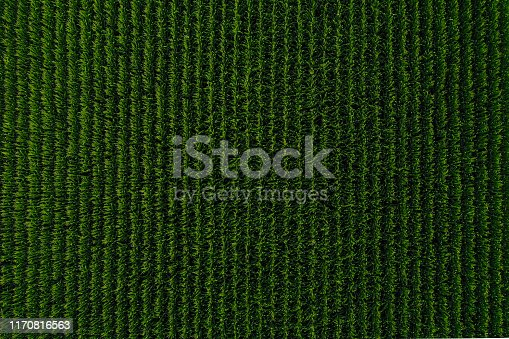 Aerial view of a corn field in Nebraska USA