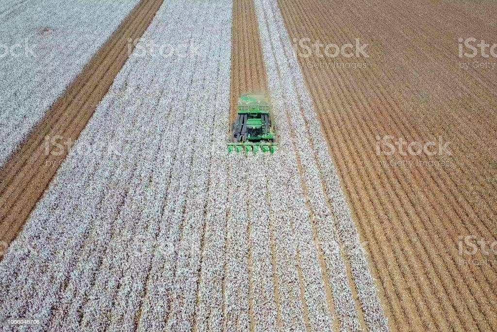 Aerial view of a Cotton picker working in a field. Aerial view of a Large green Cotton picker working in a field. Above Stock Photo