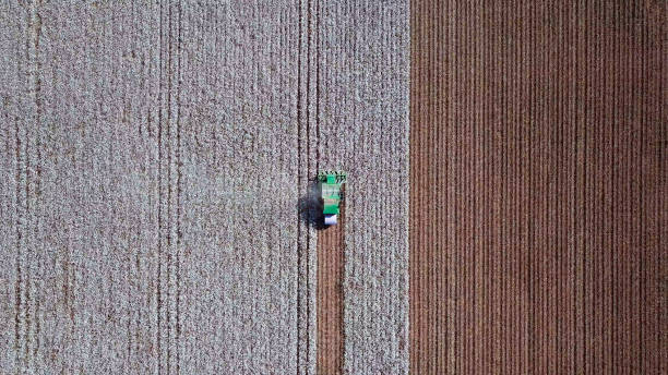 Aerial view of a Cotton picker working in a field. Aerial view of a Large green Cotton picker working in a field. cotton stock pictures, royalty-free photos & images