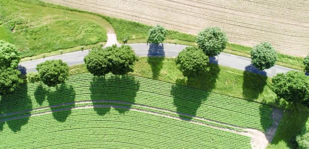luftaufnahme einer kurve eines pfades mit herrlichen grünen bäumen entlang des weges - baumwipfelpfad stock-fotos und bilder