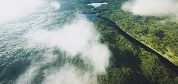 Luftaufnahme eines dichten Amazonas-Regenwaldes mit Fluss. 3D-Rendering. – Foto