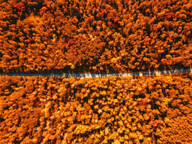 Aerial view of a drone on a green forest with asphalt road on a sunny picture id1249855208?b=1&k=6&m=1249855208&s=612x612&w=0&h=b2j2t41qg20tqcrgzarrrdri7mf7wvqpz8mazfvsnjy=