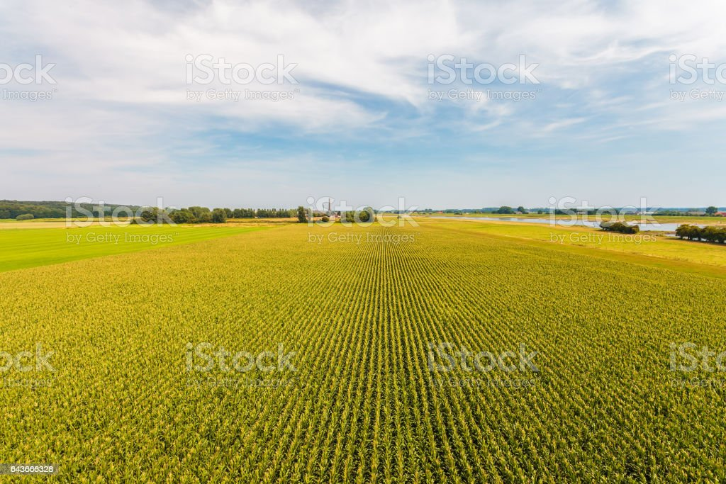 Aerial view of a farm field with corn plants stock photo
