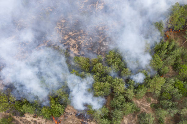 Aerial view of a fire in a pine forest. Disaster filming by drone