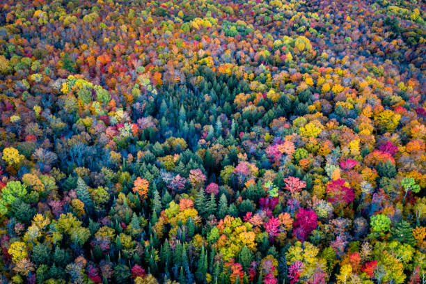 Aerial view of a forest in autumn stock photo