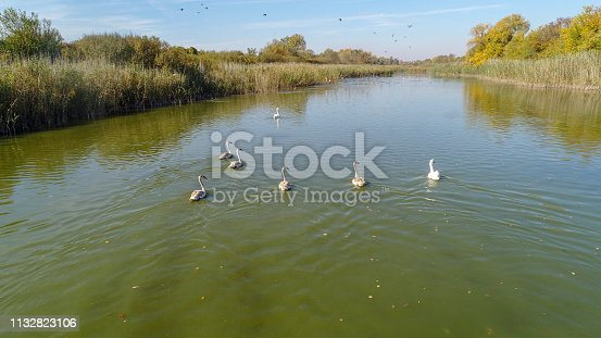 Aerial view of a  group of geese on the water in wild