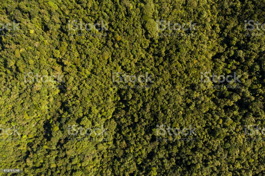 Aerial View of a Landscape of Rainforest in South America stock photo