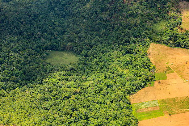 aerial view of a large  field eating into the rainforest Deforestation in Thailand, aerial view of a large soy field eating into the tropical rainforest deforestation stock pictures, royalty-free photos & images