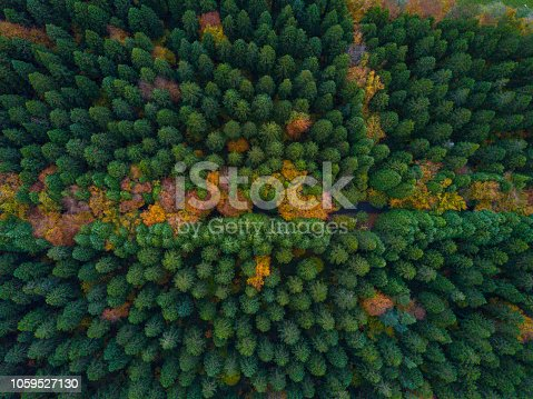 aerial view of a pine forest with multicoloured autumn scene