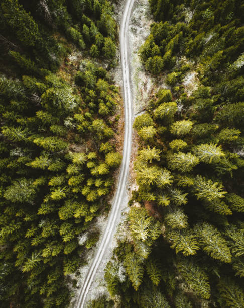 aerial view of a pine forest in switzerland stock photo