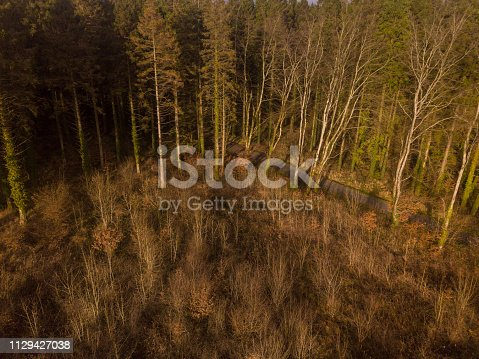 831591456 istock photo Aerial view of a pine forest in winter, Moate Park, Roscommon, Ireland. 1129427038