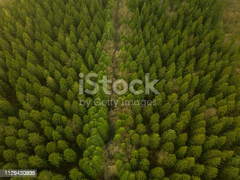 831591456 istock photo Aerial view of a pine forest in winter, Moate Park, Roscommon, Ireland. 1129430935
