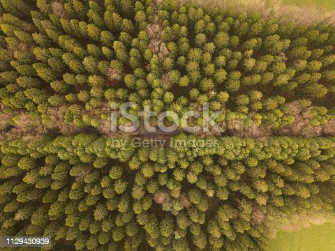 831591456 istock photo Aerial view of a pine forest in winter, Moate Park, Roscommon, Ireland. 1129430939