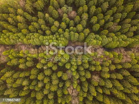 831591456 istock photo Aerial view of a pine forest in winter, Moate Park, Roscommon, Ireland. 1129637487