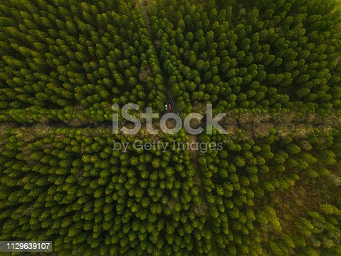 831591456 istock photo Aerial view of a pine forest in winter, Moate Park, Roscommon, Ireland. 1129639107