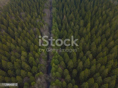 istock Aerial view of a pine forest in winter, Moate Park, Roscommon, Ireland. 1129645312