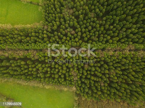831591456 istock photo Aerial view of a pine forest in winter, Moate Park, Roscommon, Ireland. 1129645329