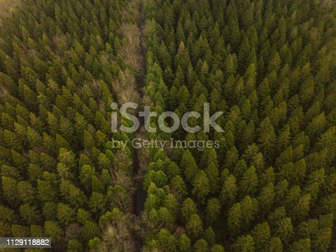 istock Aerial view of a pine forest in winter 1129118882