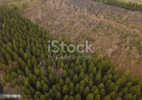 831591456 istock photo Aerial view of a pine forest in winter 1129118910