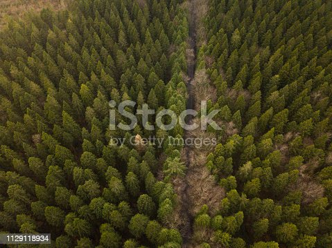 831591456 istock photo Aerial view of a pine forest in winter 1129118934