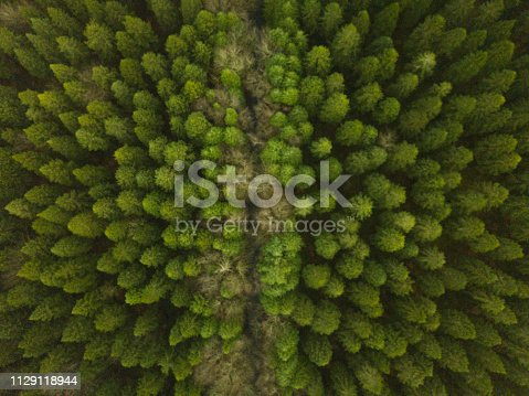 831591456 istock photo Aerial view of a pine forest in winter 1129118944