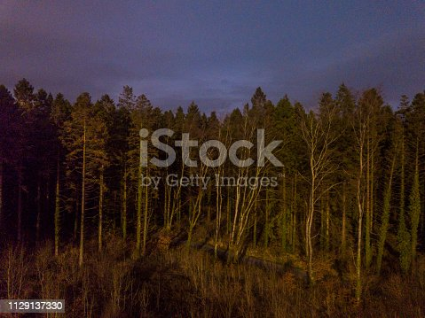 istock Aerial view of a pine forest in winter 1129137330