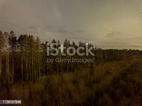 831591456 istock photo Aerial view of a pine forest in winter 1129137345