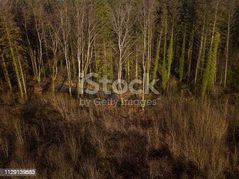 831591456 istock photo Aerial view of a pine forest in winter 1129139883