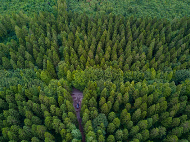 Aerial view of a pine forest, Roscommon, Ireland. stock photo