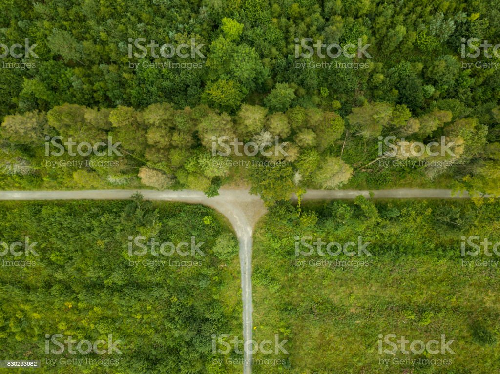 Aerial view of a pine forest, Roscommon, Ireland. royalty-free stock photo
