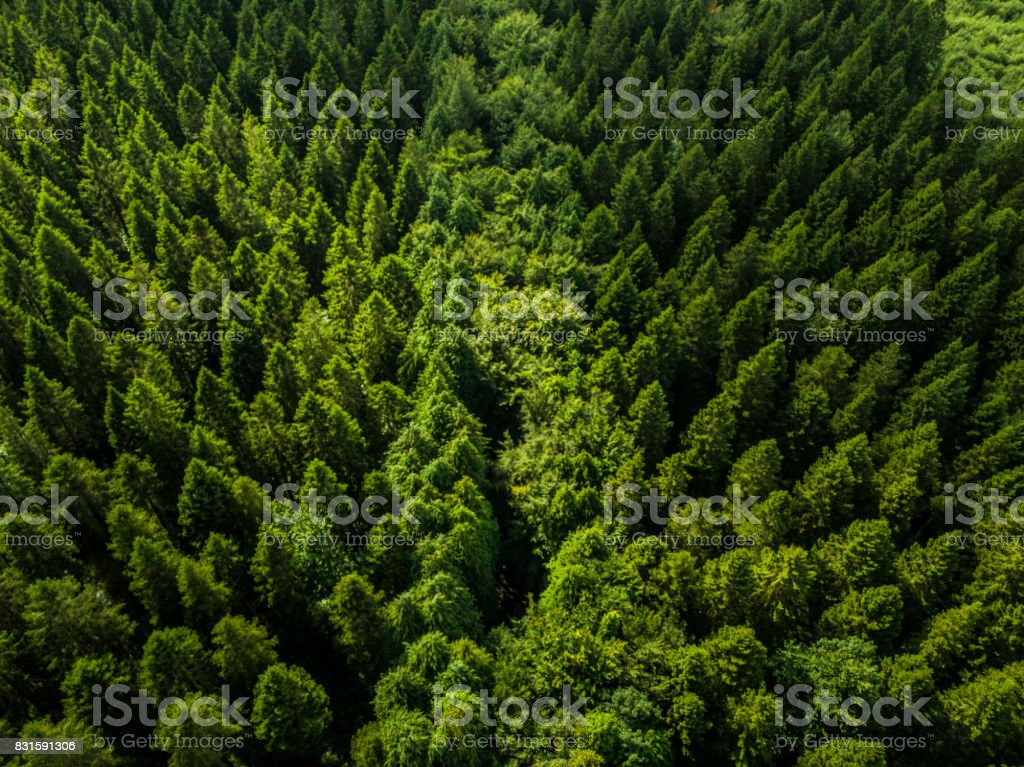 Aerial view of a pine forest, Roscommon, Ireland stock photo