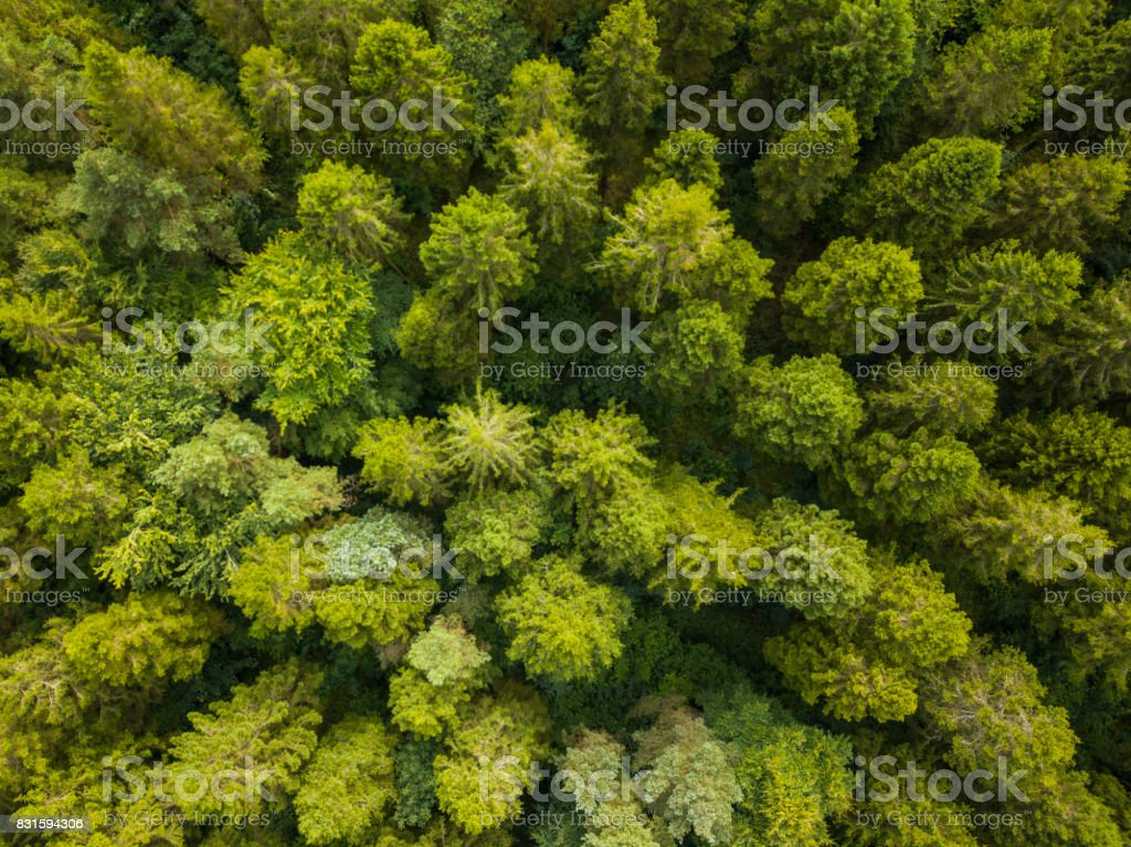 Aerial view of a pine forest, Roscommon, Ireland royalty-free stock photo