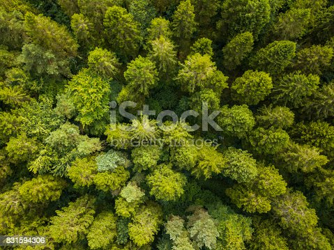 istock Aerial view of a pine forest, Roscommon, Ireland 831594306
