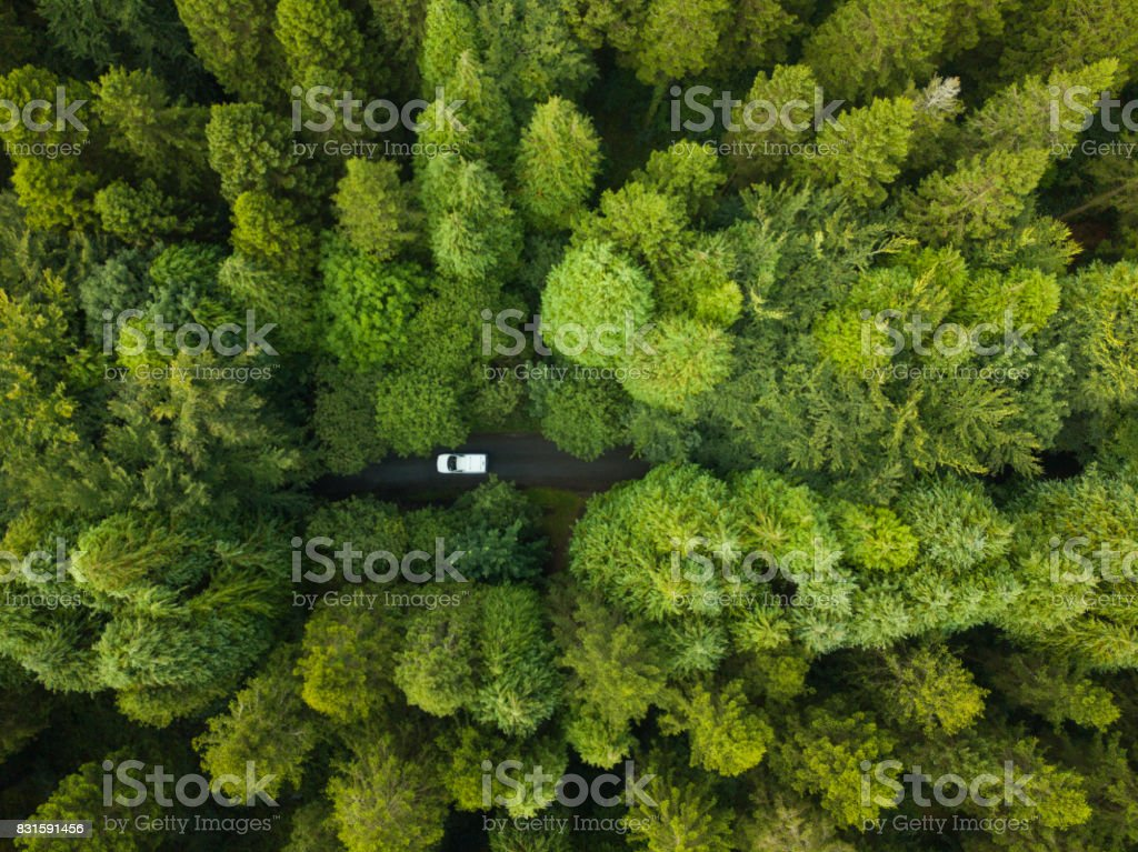 Aerial view of a pine forest with a white van driving through a pathway, Roscommon, Ireland royalty-free stock photo