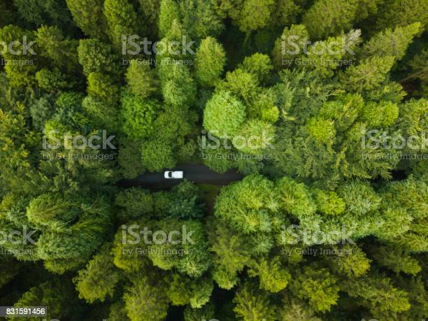 Aerial view of a pine forest with a white van driving through a picture id831591456?b=1&k=6&m=831591456&s=612x612&h=tinyvwg6vwu46sg xqwyqv11xf9m 5s9hoifbsyohjk=