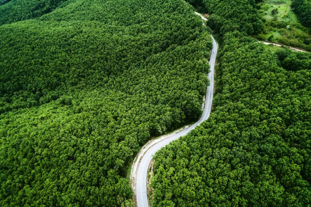 Aerial view of a provincial road passing through a forest