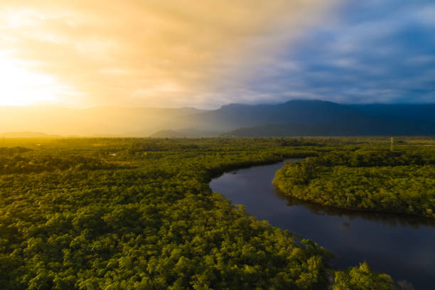 Aerial View of a Rainforest in Brazil The best of Brazil manaus stock pictures, royalty-free photos & images