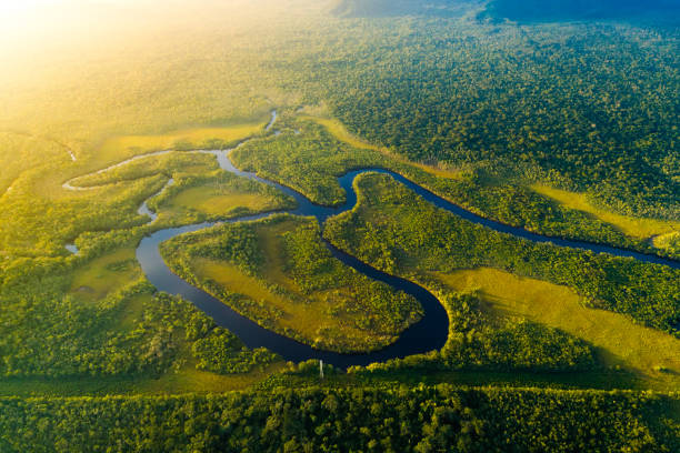 aerial view of a rainforest in brazil - river stock pictures, royalty-free photos & images