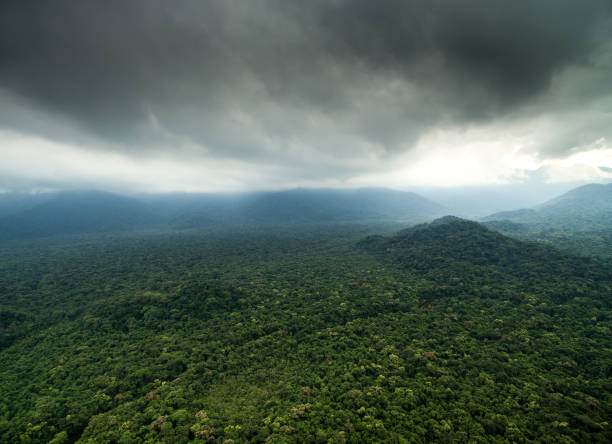 aerial view of a rainforest - democratic republic of the congo stock photos and pictures